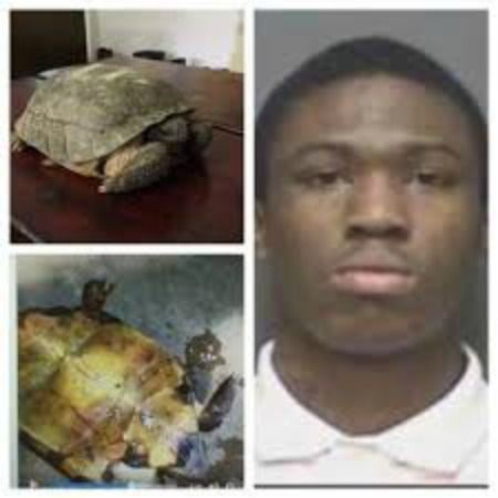 Dotham man sets turtle on fire while live-streaming to get Facebook views
