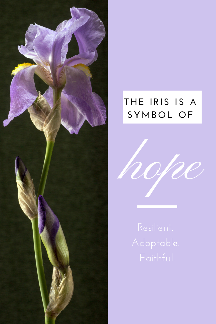 Are You Like An Iris There S Hope Hope Symbol Hope Flower Healing Flowers