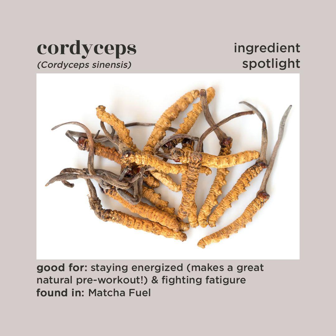 Ingredient spotlight reishi chaga cordyceps