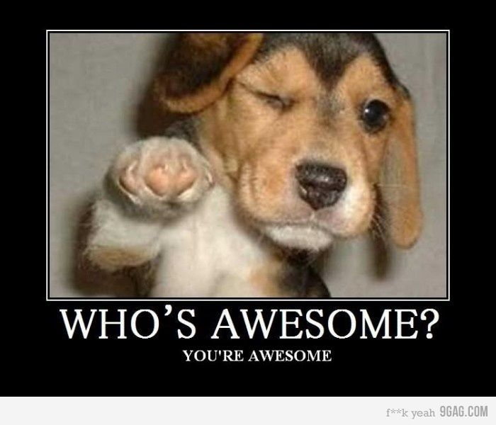Who S Awesome Cheer Up Funny Dog Memes Funny Dog Memes