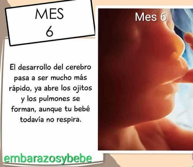 f0eaf08a4 Sexto mes de embarazo
