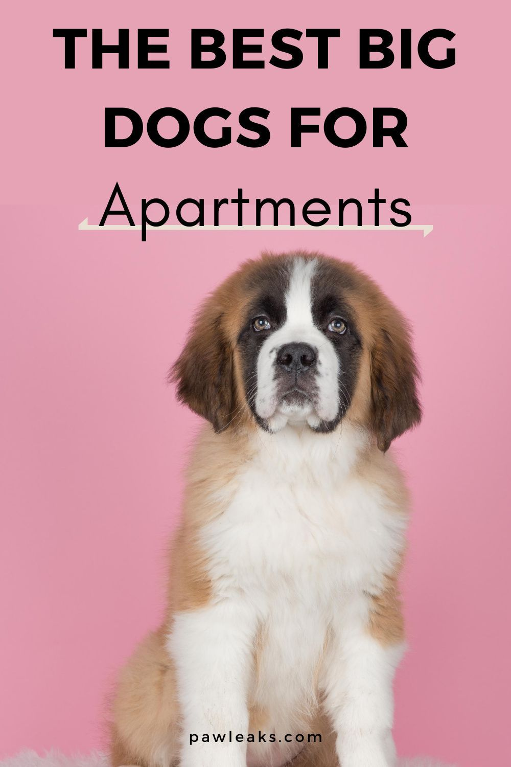 The Best Big Dogs For Apartments By Rottweiler Owner Pawleaks In 2020 Best Big Dogs Puppies That Dont Shed Big Dogs