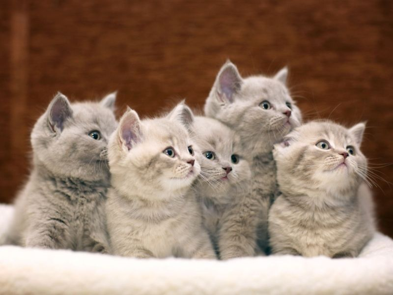 Kleine Baby Katzen