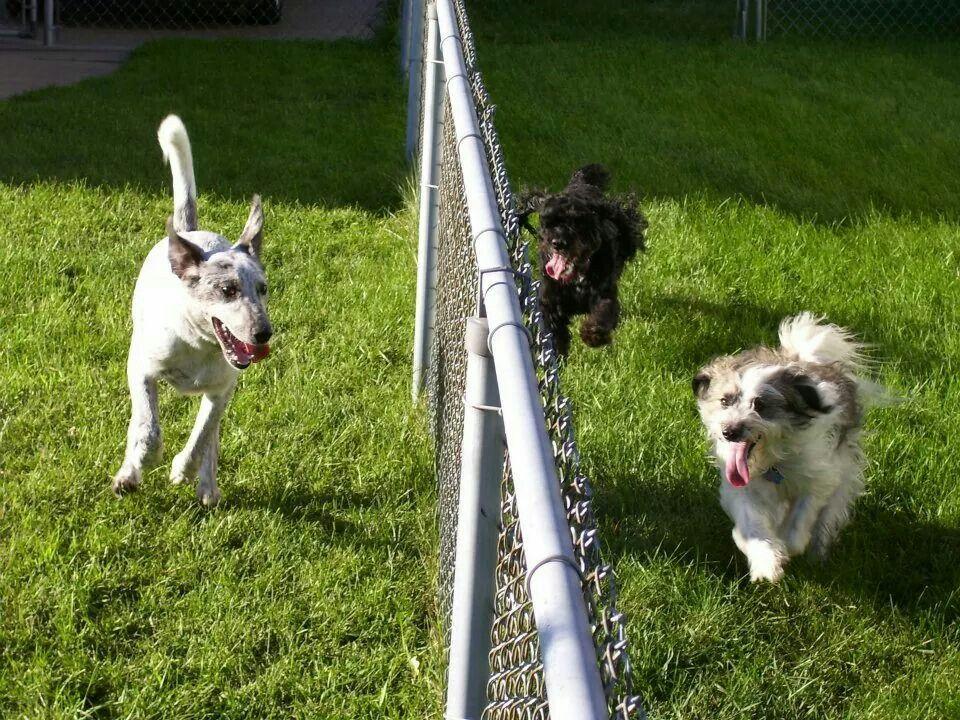 The Adventures of Waylen Jones Catahoula/Lab RescueDog