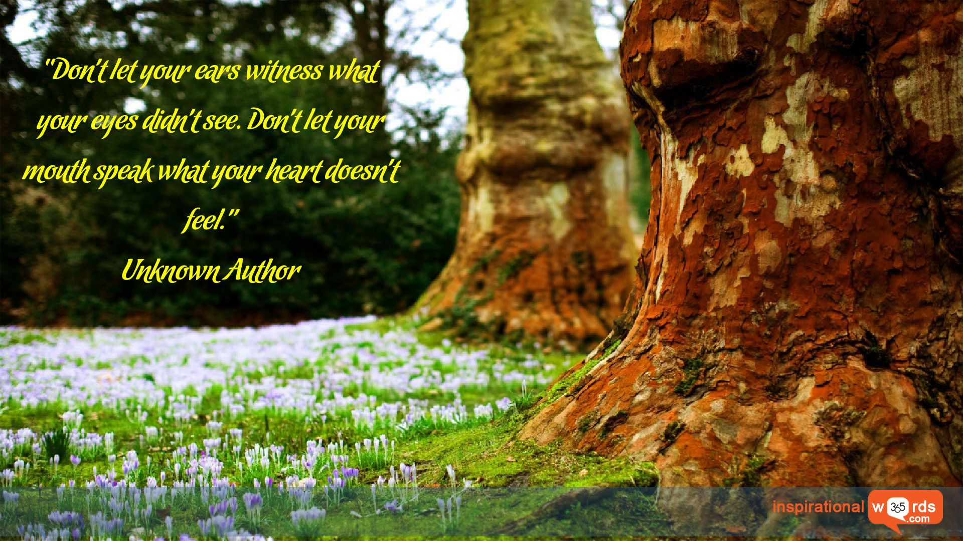 """Inspirational Wallpaper Quote. Unknown Author """"Don't let"""