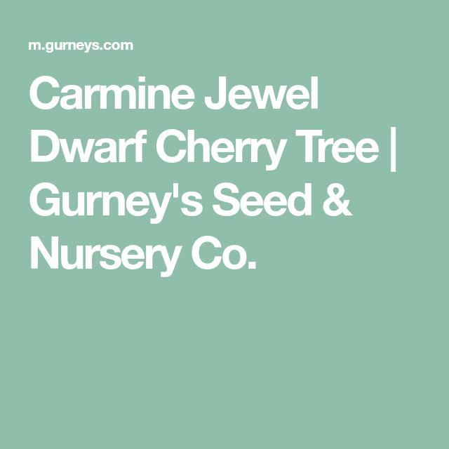 Carmine Jewel Cherry: Carmine Jewel Dwarf Cherry Tree