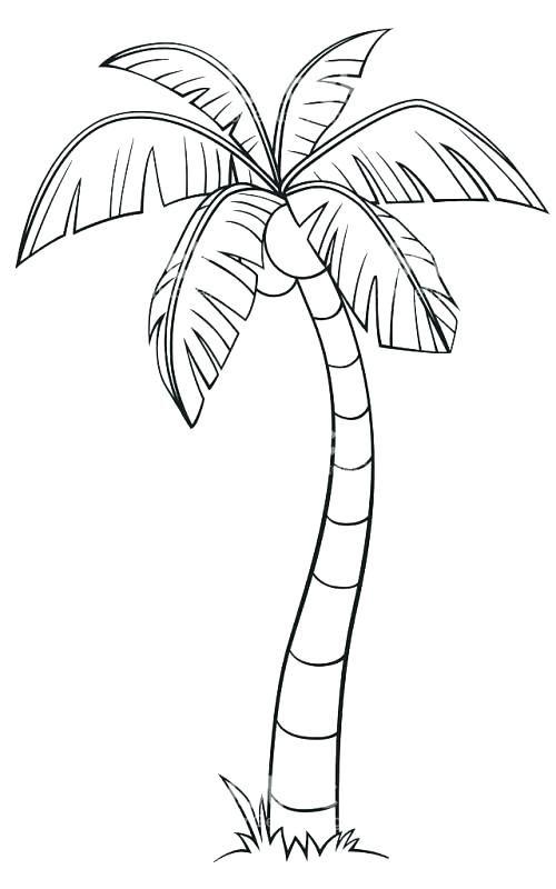 sketch of a palm tree line drawing palm tree palm tree