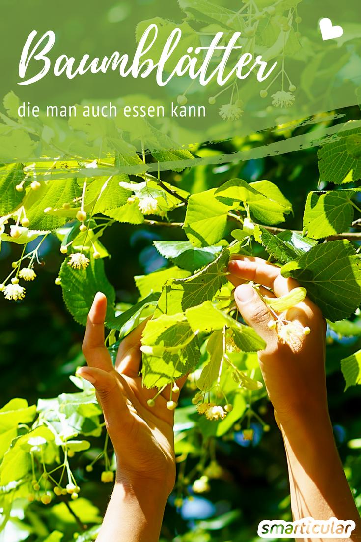 Diese Baumblatter Sind Essbar Und Gesund Fur Salate Smoothies Co Essbare Pflanzen Baum Blatter Krauter Pflanzen
