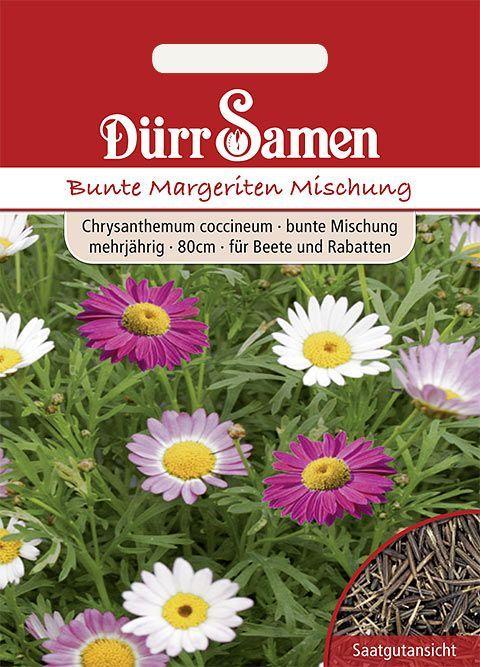 Bunte Margeriten Bunte Mischung Mehrjahrig 80cm Margeriten Pflanzen Pflege Bunt