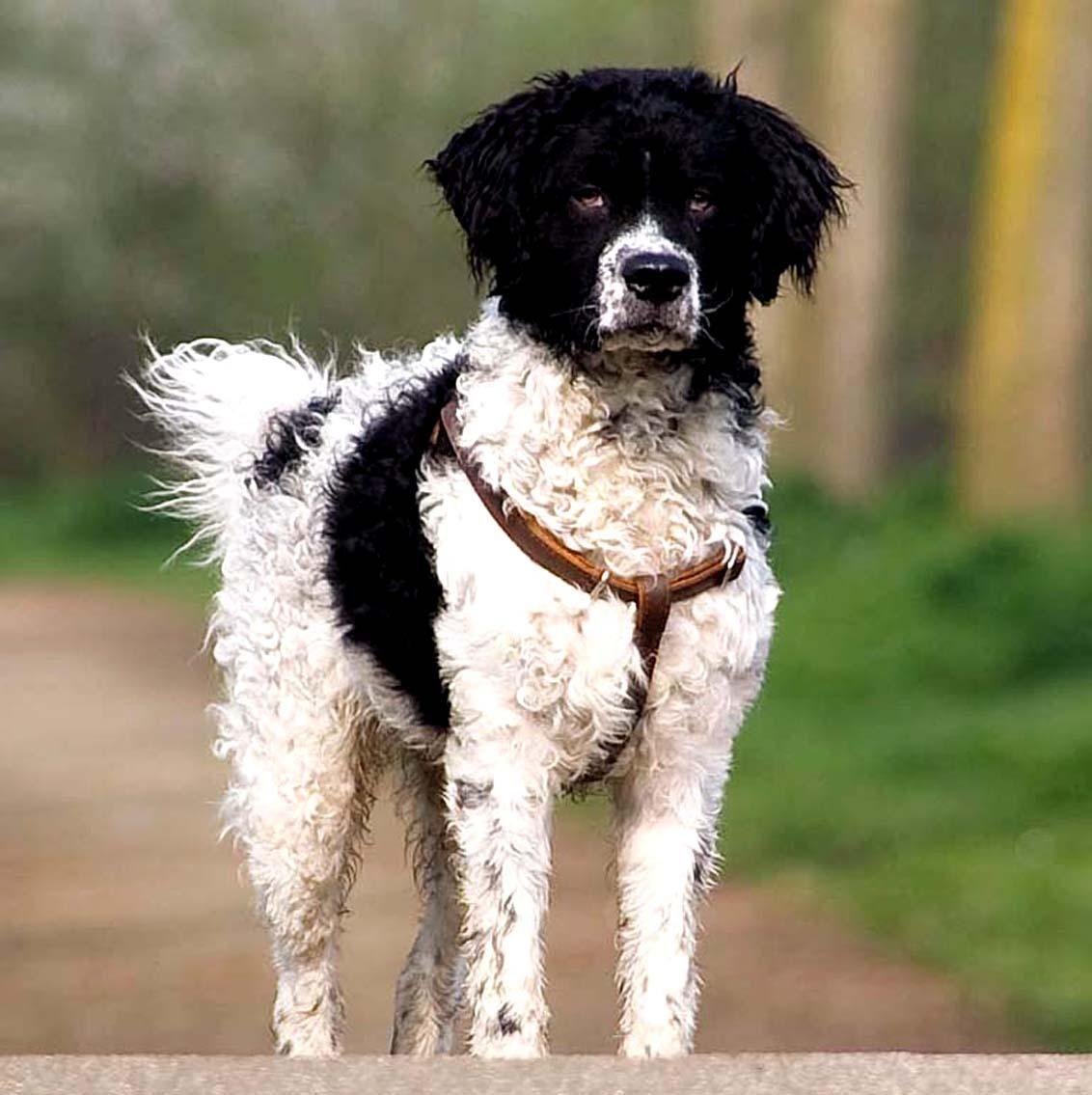 Otterhound dog Dog names, Dog breeds, Unique dog breeds