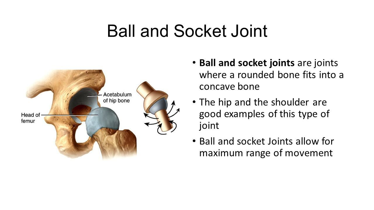 Image Result For Ball And Socket Joints Urwa Pinterest
