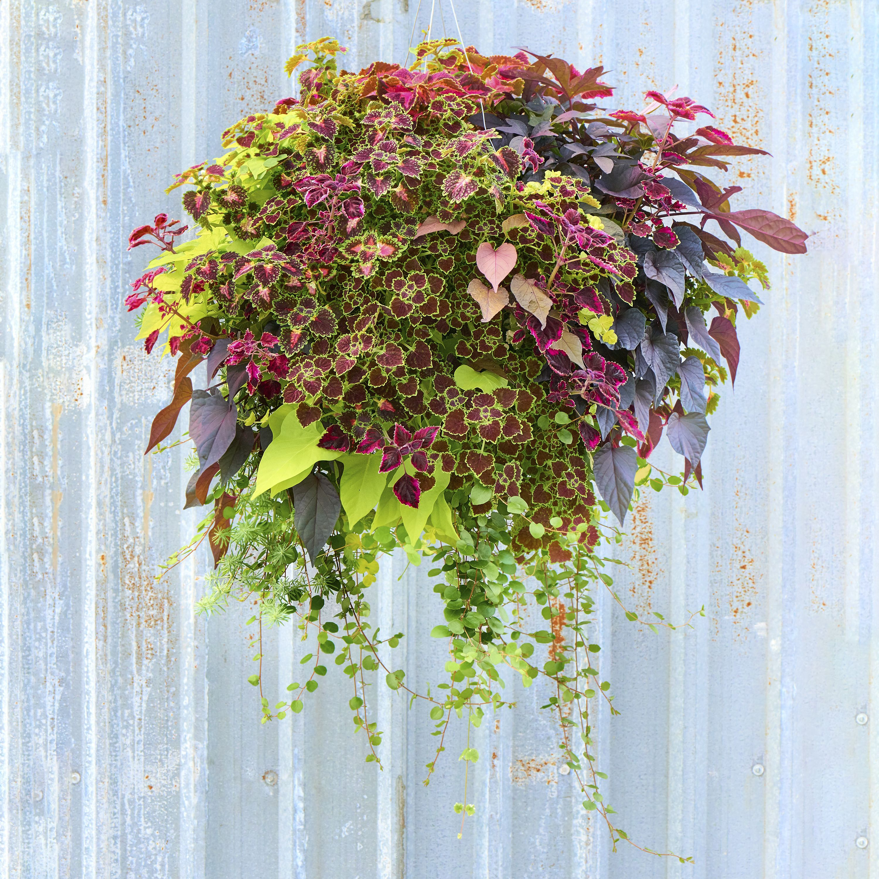 Full Foliage Moss Hanging Basket   Plants, Gardens and Container ...