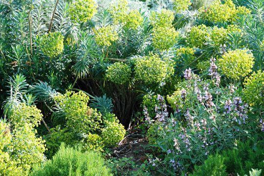 plantes d 39 ext rieur sans arrosage 15 photos pour faire votre choix jardin pinterest. Black Bedroom Furniture Sets. Home Design Ideas