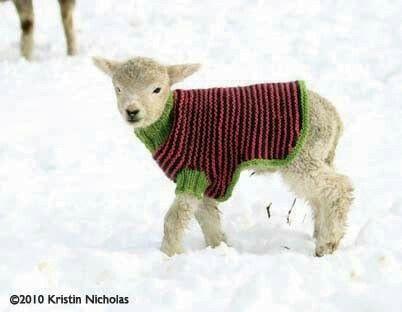 Pin by Cathleen McManus on knotty DREAMS | Sheep and lamb ...