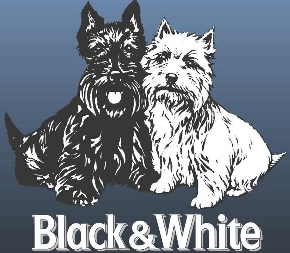 Perricatessen Blackandwhite Azul Perros Perruno Terrier Razas De Perros