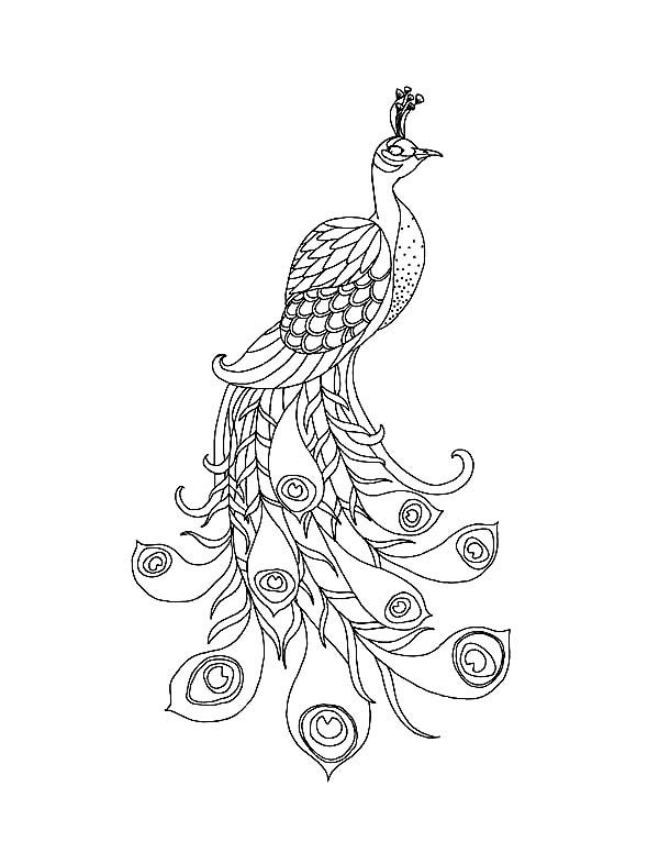 Peacock a beautiful peacock with his long train coloring page