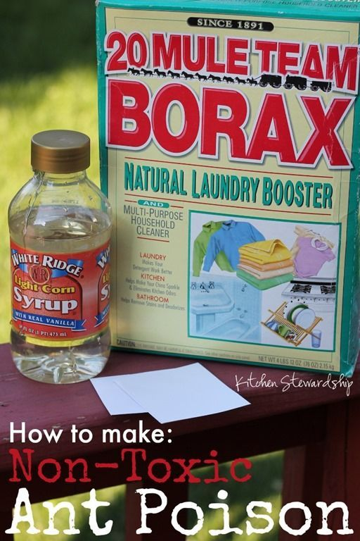 How To Make Homemade Non-Toxic Ant Poison