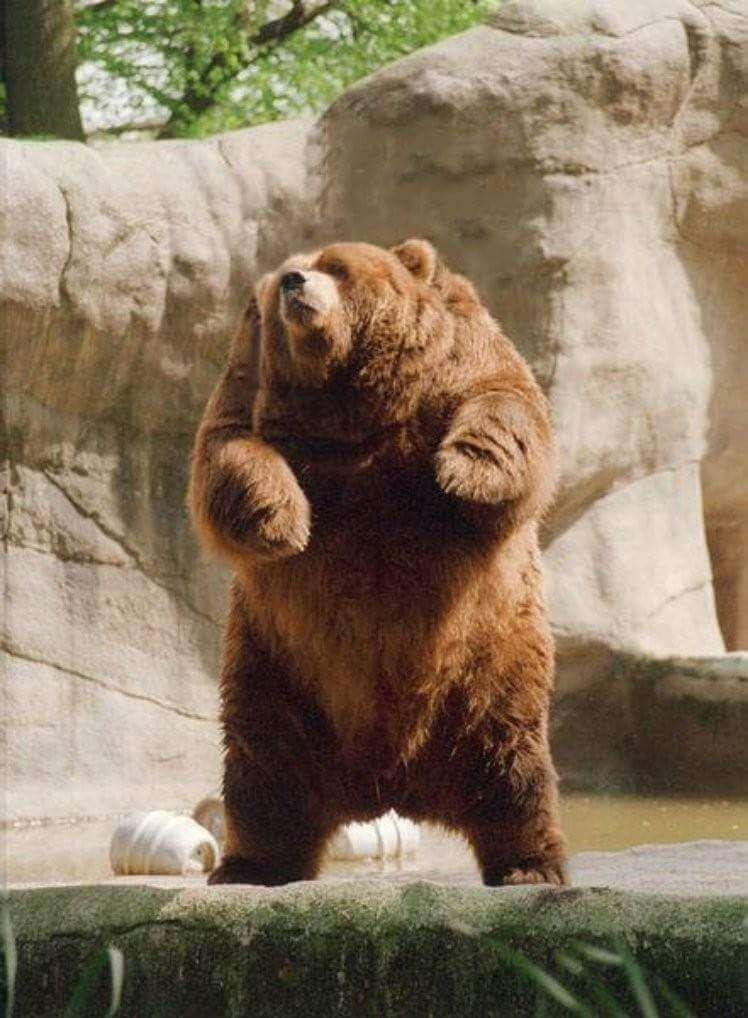 Image of: Necks Meme Animals Without Necks 33 1 Beano 34 Animals Without Necks That Honestly Look Way Better