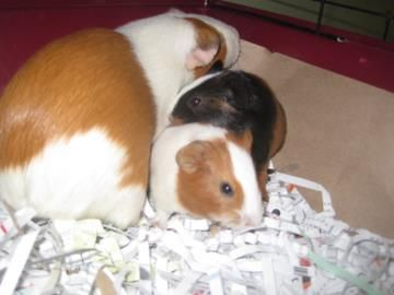 Pin On Adoptable Pets In South Carolina