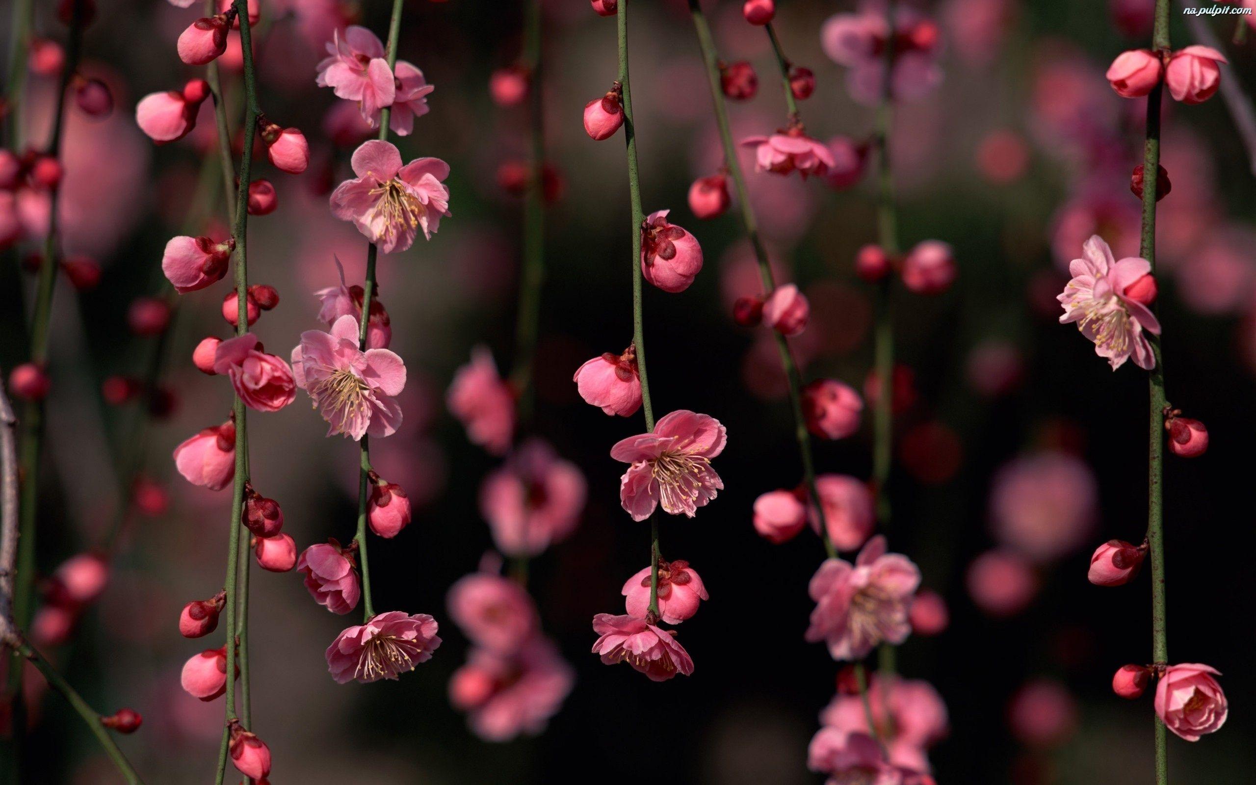Pin By Alina740 On Kwiaty Flowers Floral Wallpaper Desktop Pink Flowers