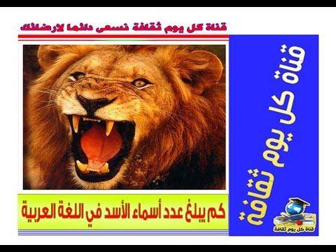 اسماء الاسد هل تعلم كم يبلغ عدد أسماء الأسد في اللغة العربية ؟ معلومات عن  الحيوانات | Animals, Lion