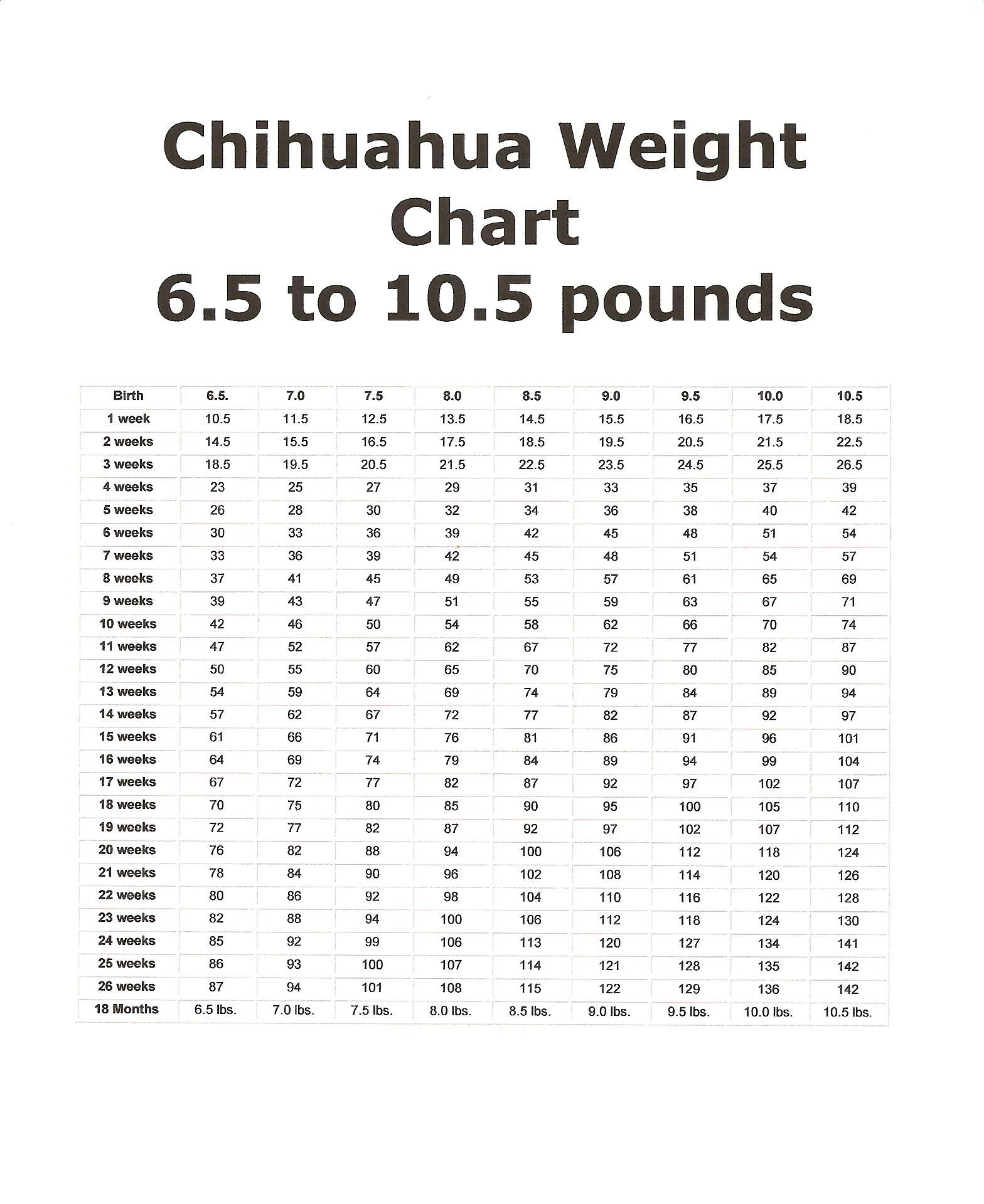 Chihuahua Growth Charts Chihuahua Puppies Weight Charts