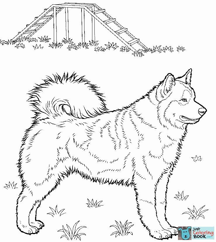 Husky Coloring Page Dog Coloring Page Coloring Pages Printable