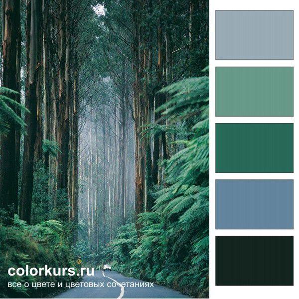 Фото. Лесная дымка - это самые лучшие цвета для интерьера ...