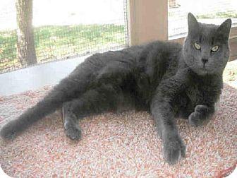 Raleigh Nc Manx Meet Tink A Cat For Adoption Http Www Adoptapet Com Pet 11602529 Raleigh North Carolina Cat With Images Cat Adoption Kitten Adoption Pets