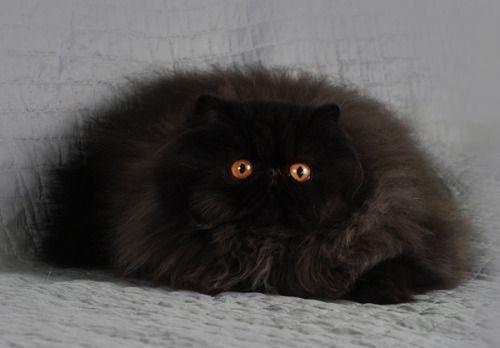 Http Www Thecatsmeowpetsitting Com Cats Cute Cats Crazy Cats