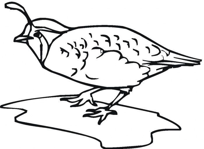 Quail Bird Coloring Page Super Coloring Bird Coloring Pages Coloring Pages Free Coloring Pages