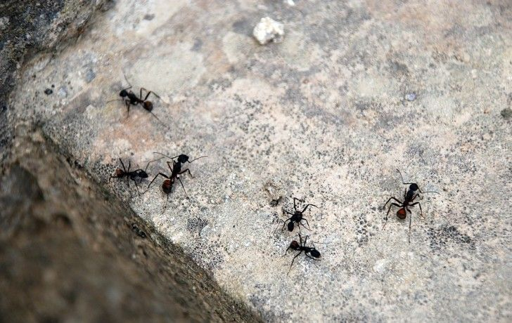 r pulsif naturel pour les fourmis voici comment les tenir. Black Bedroom Furniture Sets. Home Design Ideas