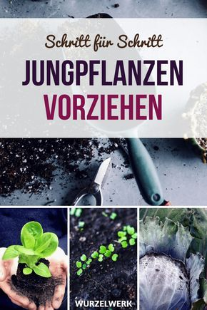 Jungpflanzen im Haus vorziehen - Wurzelwerk #vertikalergemüsegarten
