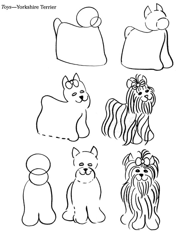 How To Draw A Yorkshire Terrier From Dover Books Via Inkspired
