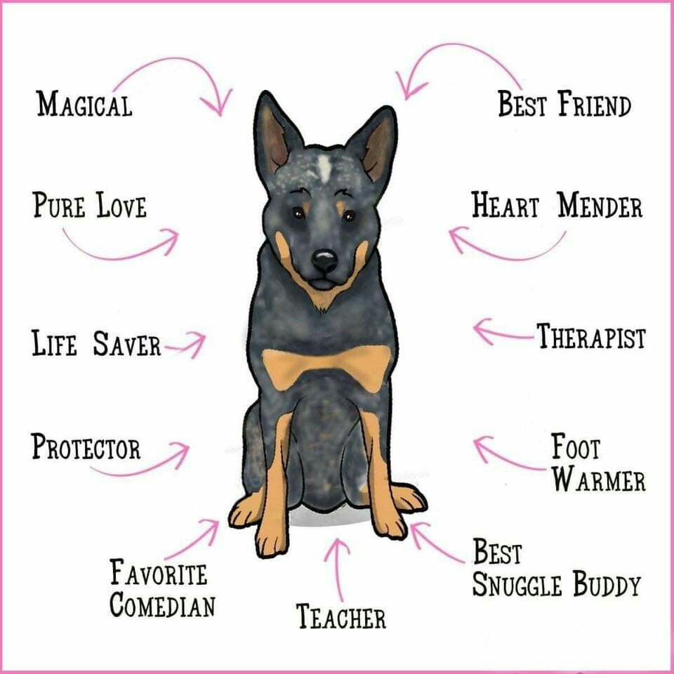 Pin by Karen Levin on Cattle Dawg Art Cattle dog
