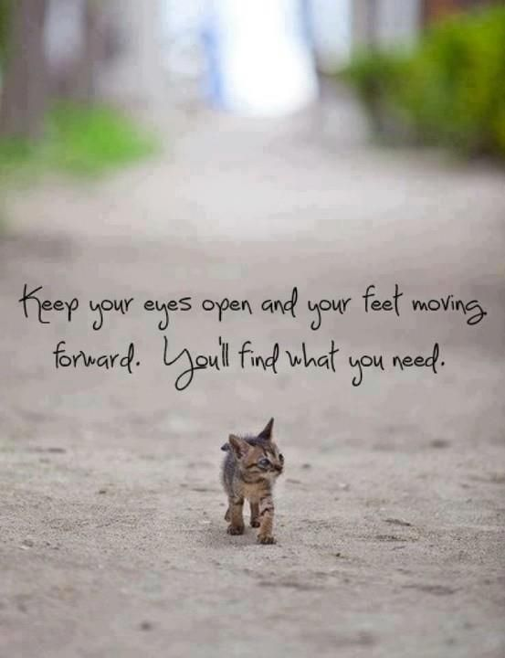 Keep Moving Forward Life Quotes Positive Quote Inspirational Kitten Cute Animals