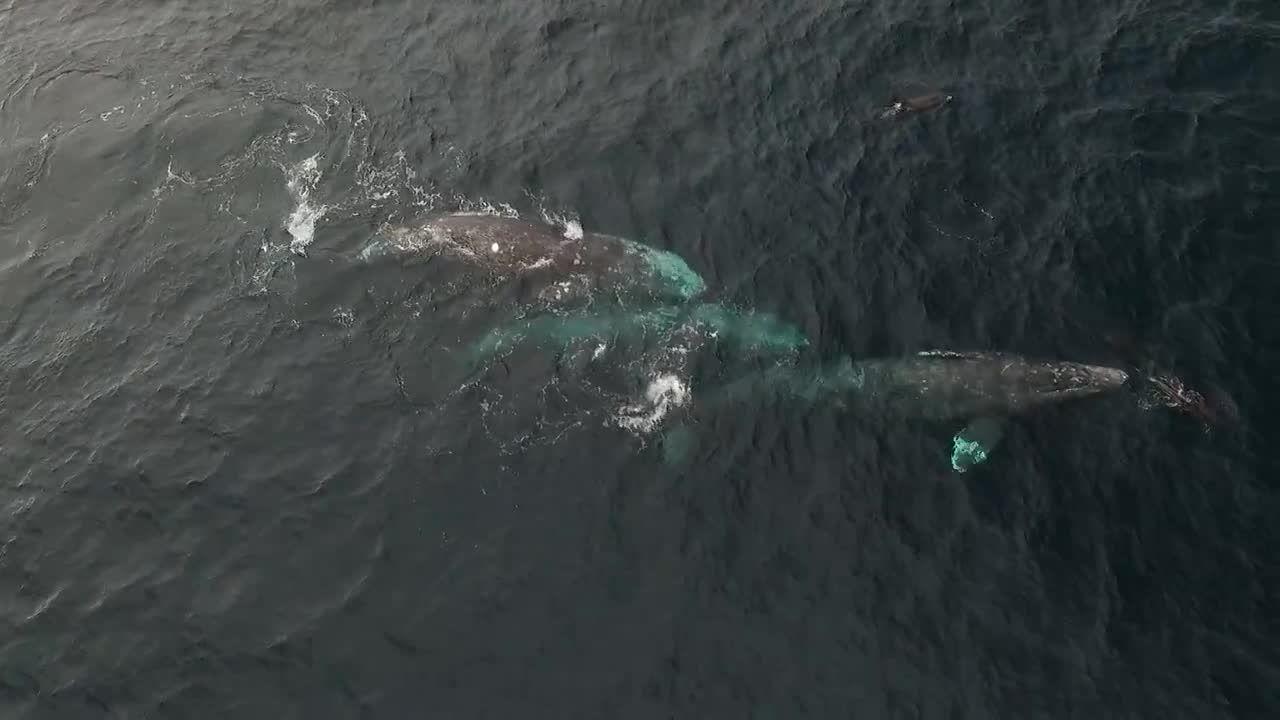 Whale Emerged