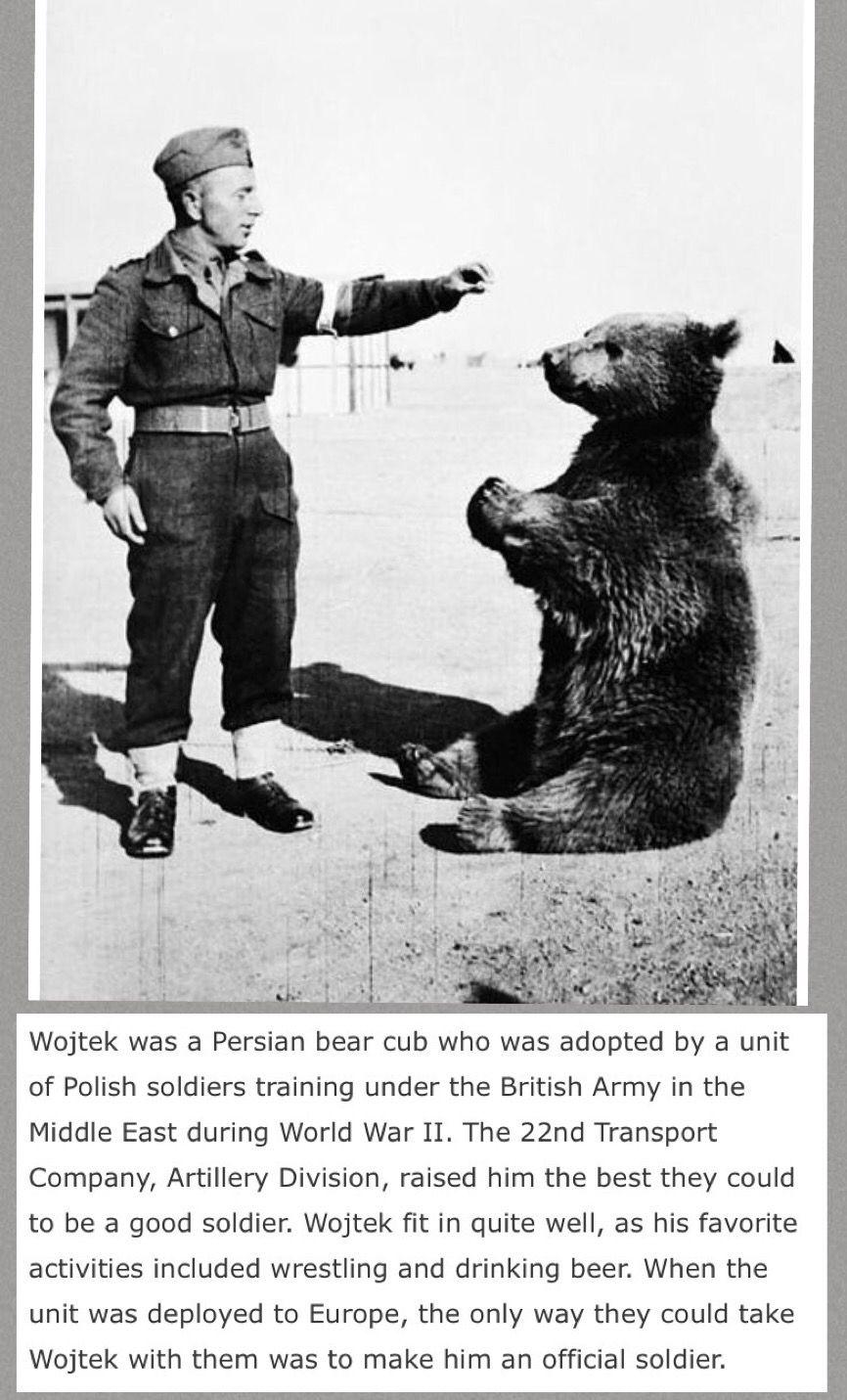Pin by Pamela Lee on Animals in WWII Wojtek bear, World
