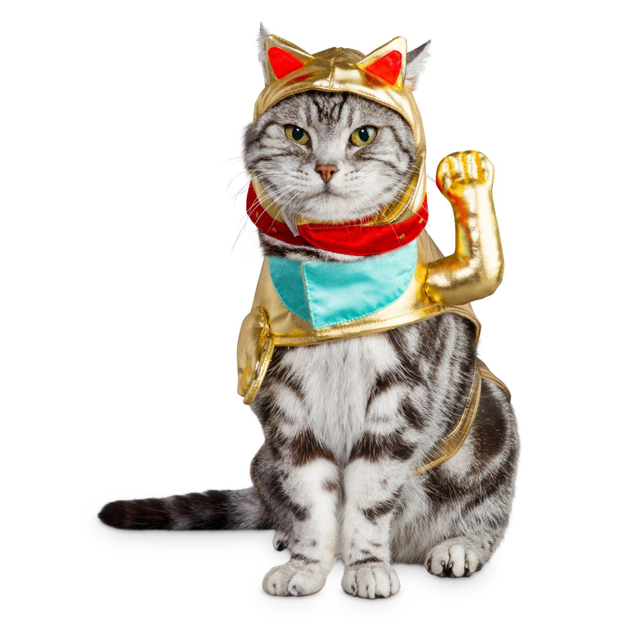 Bootique Lucky Cat Costume Petco Cat Costumes Cat Halloween Costume Halloween Cat