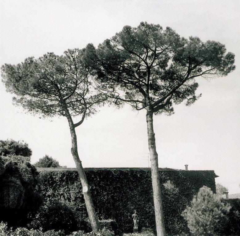 Elizabeth Matheson, Villa Hasler Garden, Lucca, Italy, 2001