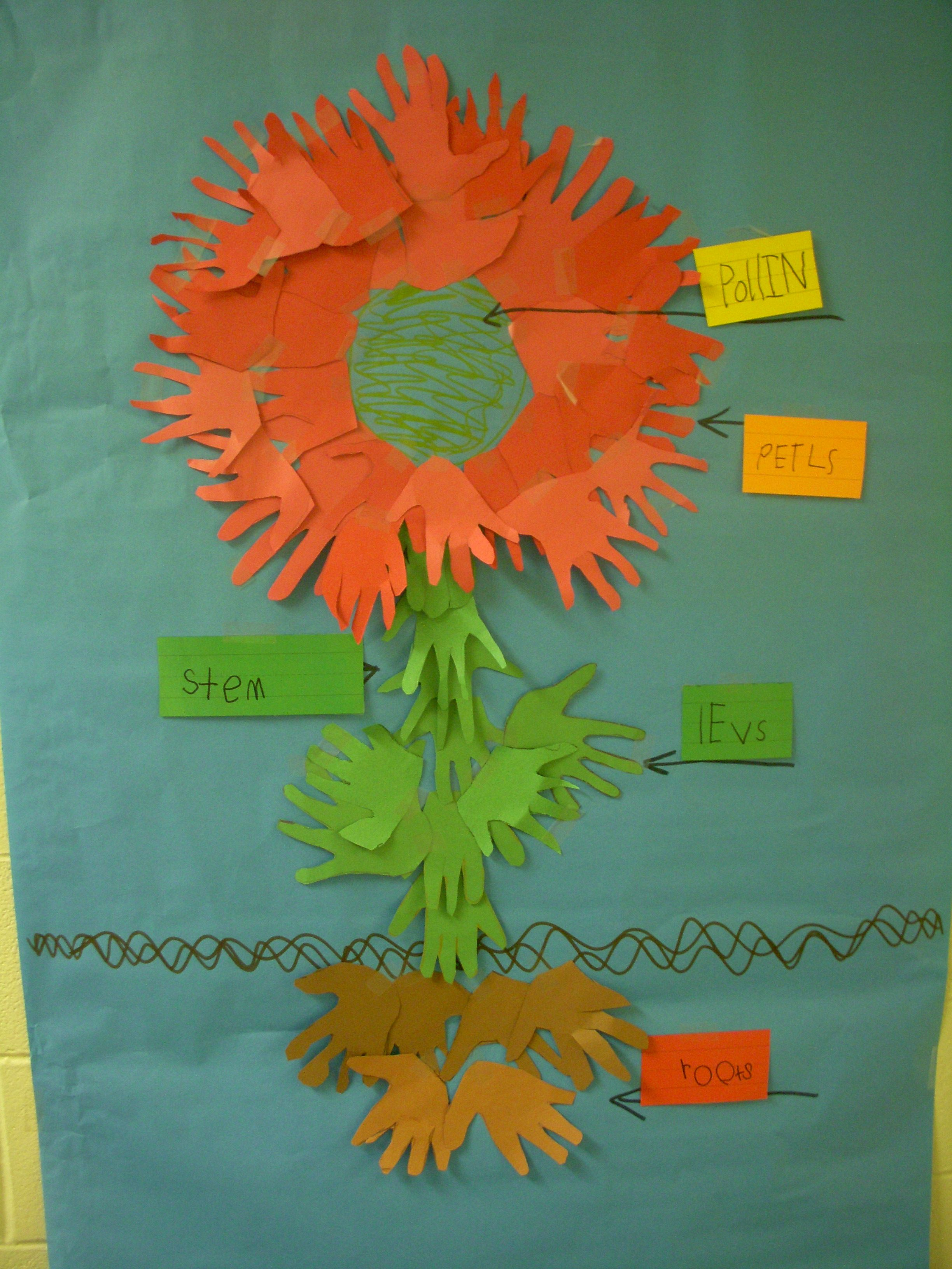 Kindergarten Plants Students Trace And Cut Out Hands Combine Entire Class As A Flower Label