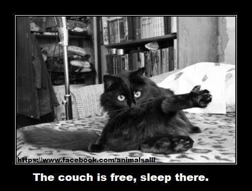 The couch is free... :)