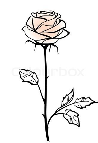 Beautiful Single Pink Rose Flower Isolated On The Whitebackground Vector Illustration Vector Colourbox Roses Drawing Rose Stencil Flower Drawing
