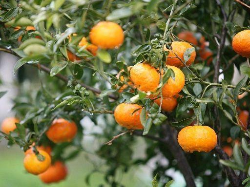 Schnell wachsende Obstbäume #schnellwachsendepflanzen Schnell wachsende Obstbäume wachsende schnell obstbaume #schnellwachsendepflanzen Schnell wachsende Obstbäume #schnellwachsendepflanzen Schnell wachsende Obstbäume wachsende schnell obstbaume #schnellwachsendepflanzen Schnell wachsende Obstbäume #schnellwachsendepflanzen Schnell wachsende Obstbäume wachsende schnell obstbaume #schnellwachsendepflanzen Schnell wachsende Obstbäume #schnellwachsendepflanzen Schnell wachsende Obstbäume wa #schnellwachsendepflanzen