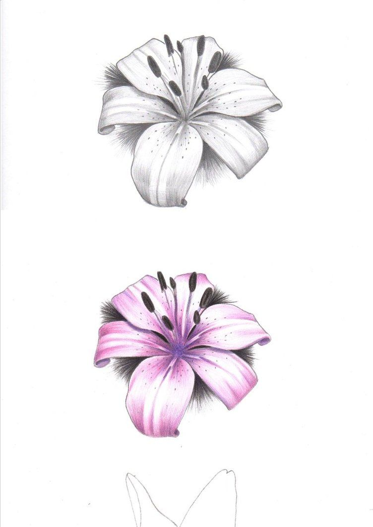 Tiger lily tattoo set tattoo ideas pinterest tiger lily tiger lily tattoo set izmirmasajfo Choice Image