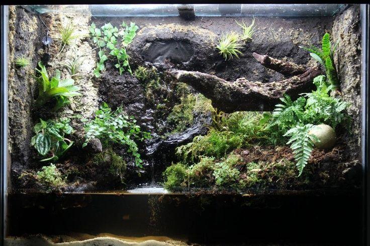 dart frog mangrove terrarium - Google Search | Dart Frog ... 10 Gallon Paludarium