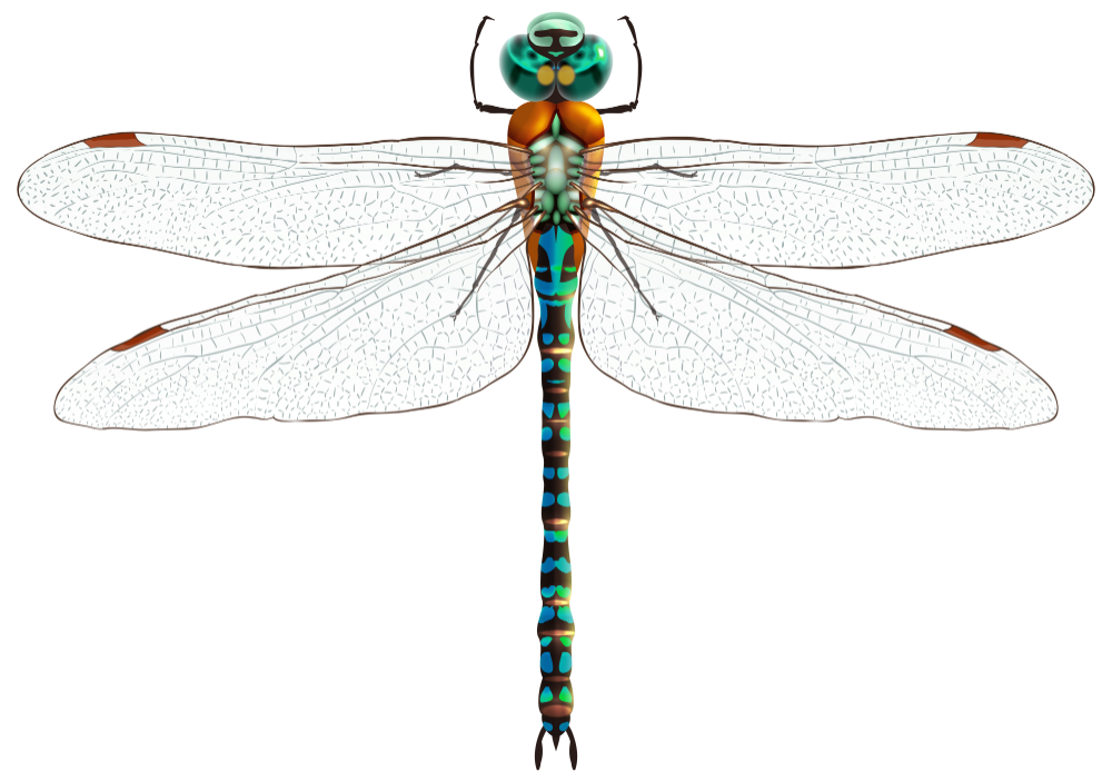 Dragonfly Png Clip Art Best Web Clipart Dragonfly Png Dragonfly Dreams