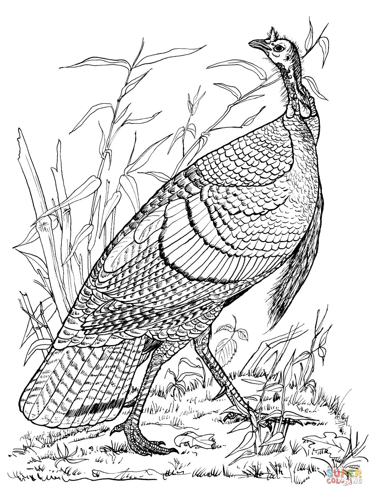 adult Coloring pages Thanksgiving | Wild Turkey Hen Coloring Online