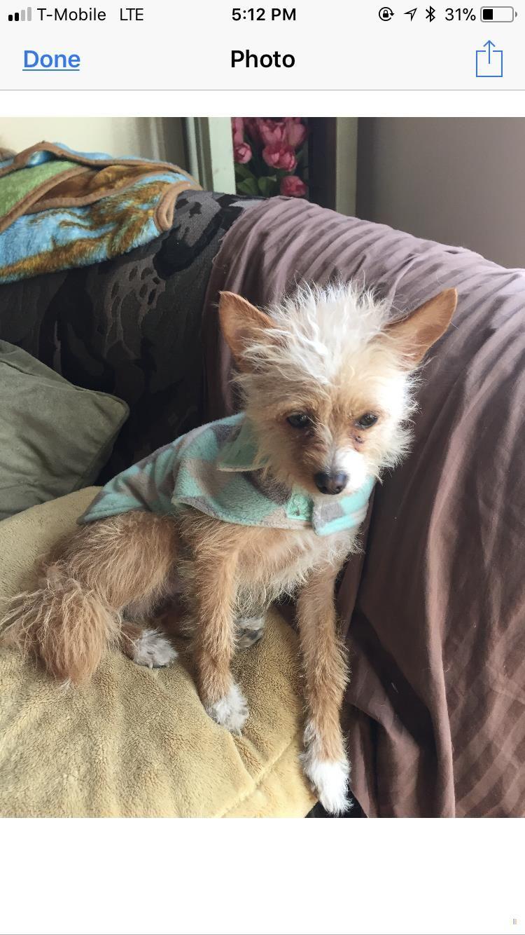 Back Home Dog Mix Romeoville Il Usa 60446 Dog Mixes Losing A Dog Dog Help