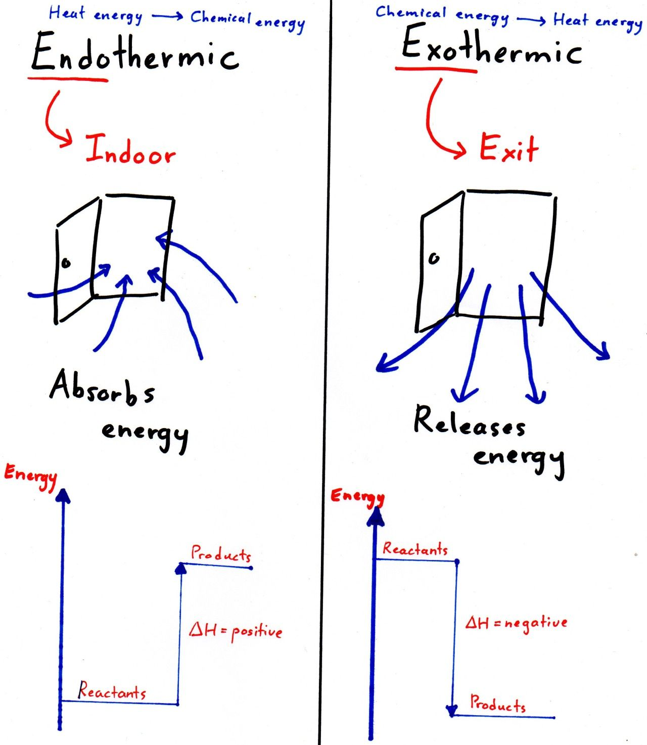 Spmstraighta Endothermic Amp Exothermic